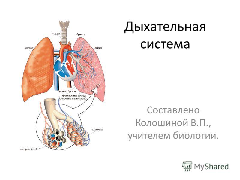 Дыхательная система Составлено Колошиной В.П., учителем биологии.