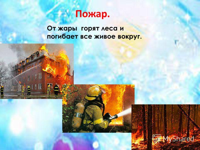 От жары горят леса и погибает все живое вокруг. Пожар.