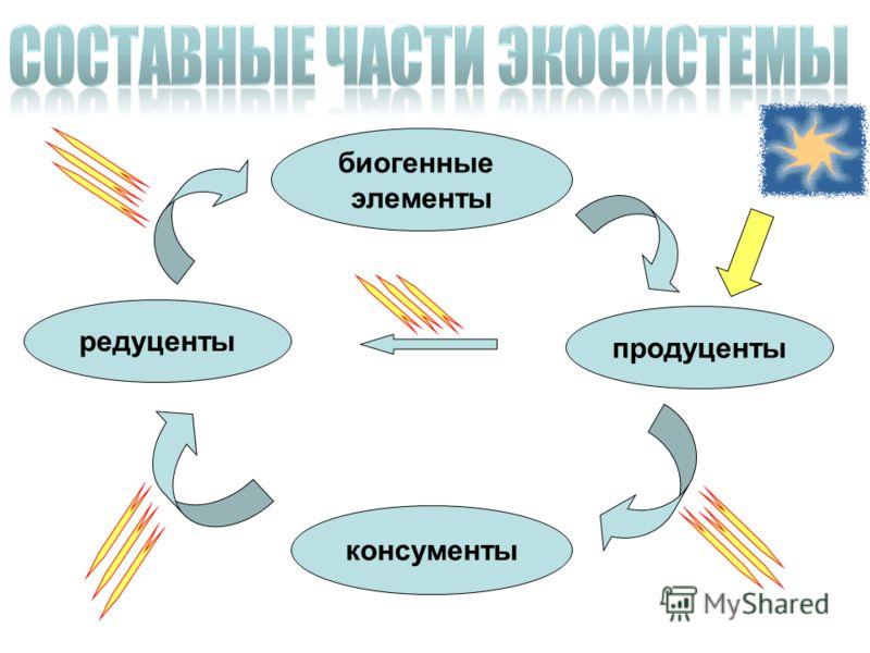 биогенные элементы продуценты консументы редуценты