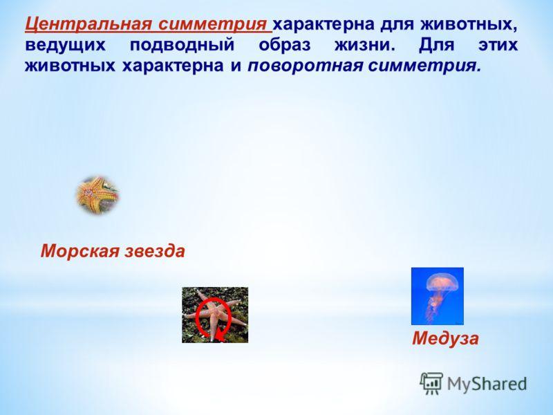 Центральная симметрия характерна для животных, ведущих подводный образ жизни. Для этих животных характерна и поворотная симметрия. Морская звезда Медуза