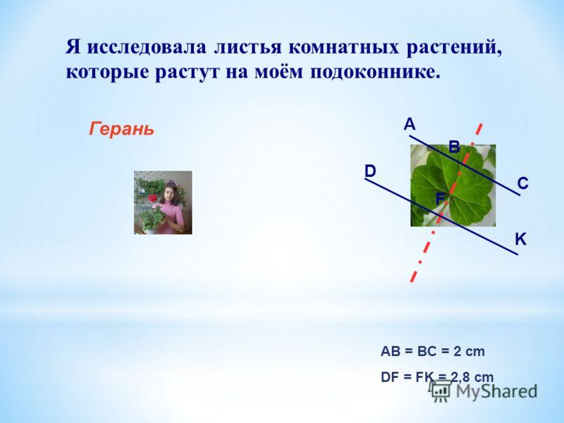 Я исследовала листья комнатных растений, которые растут на моём подоконнике. Герань AB = BC = 2 cm DF = FK = 2,8 cm А B C D F K