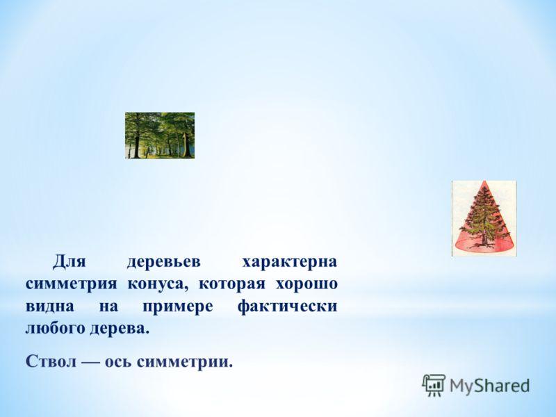 Для деревьев характерна симметрия конуса, которая хорошо видна на примере фактически любого дерева. Ствол ось симметрии.