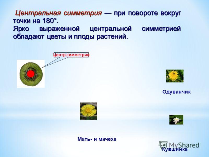 Центральная симметрия при повороте вокруг точки на 180°. Центральная симметрия при повороте вокруг точки на 180°. Ярко выраженной центральной симметрией обладают цветы и плоды растений. Центр симметрии Одуванчик Кувшинка Мать- и мачеха