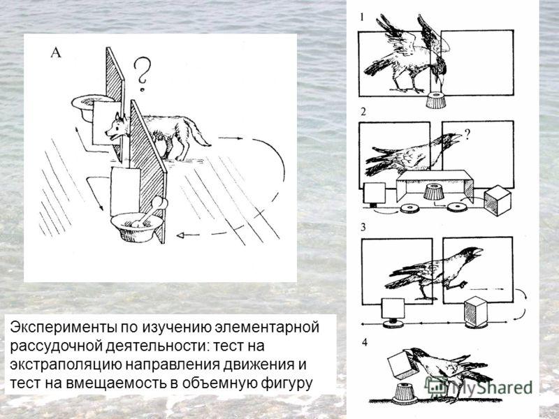 Эксперименты по изучению элементарной рассудочной деятельности: тест на экстраполяцию направления движения и тест на вмещаемость в объемную фигуру