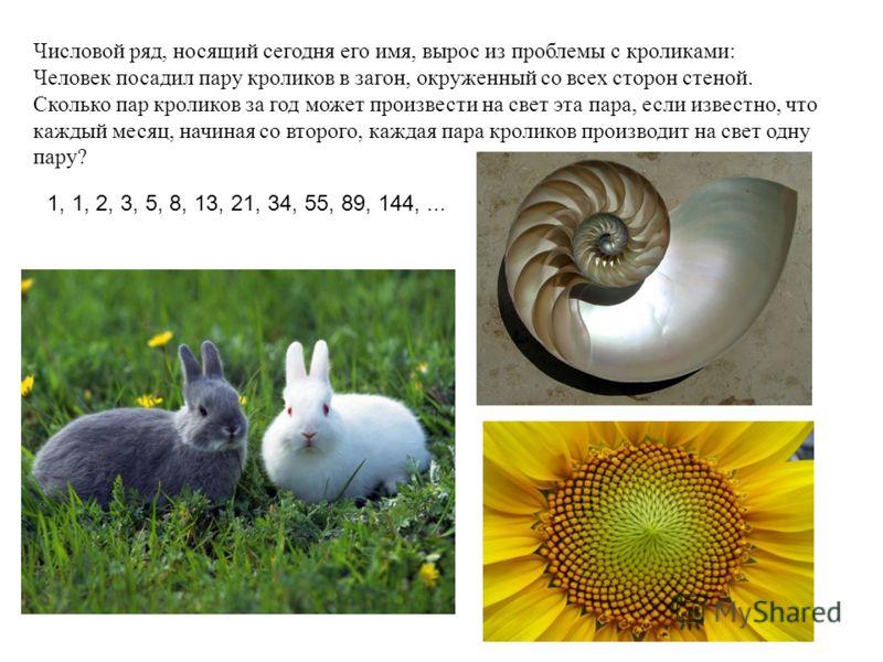 Числовой ряд, носящий сегодня его имя, вырос из проблемы с кроликами: Человек посадил пару кроликов в загон, окруженный со всех сторон стеной. Сколько пар кроликов за год может произвести на свет эта пара, если известно, что каждый месяц, начиная со