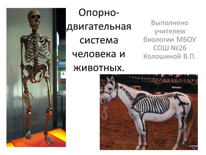Опорно- двигательная система человека и животных. Выполнено учителем биологии МБОУ СОШ 26 Колошиной В.П.