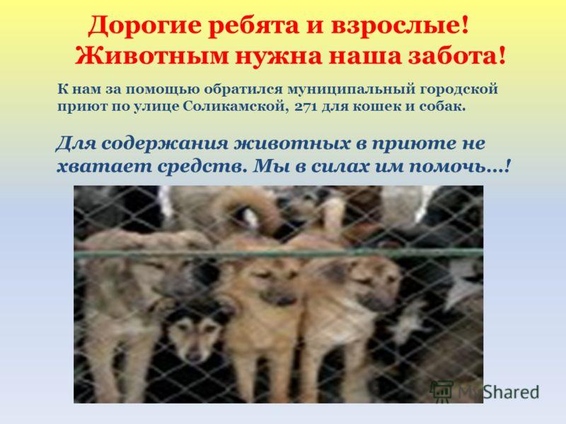 Дорогие ребята и взрослые! Животным нужна наша забота! К нам за помощью обратился муниципальный городской приют по улице Соликамской, 271 для кошек и собак. Для содержания животных в приюте не хватает средств. Мы в силах им помочь…!