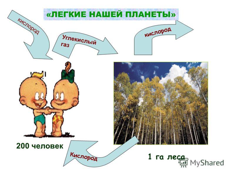 200 человек Углекислыйгаз кислород 1 га леса Кислород кислород «ЛЕГКИЕ НАШЕЙ ПЛАНЕТЫ»