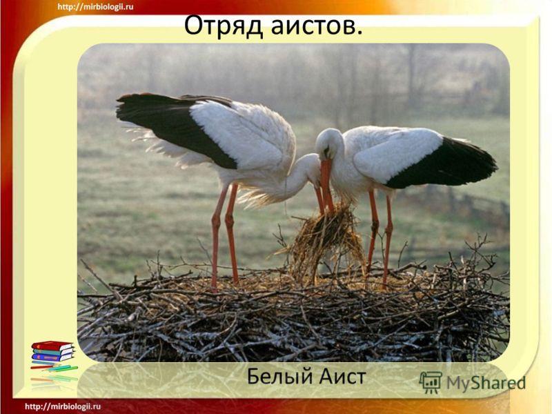 Отряд аистов. Белый Аист