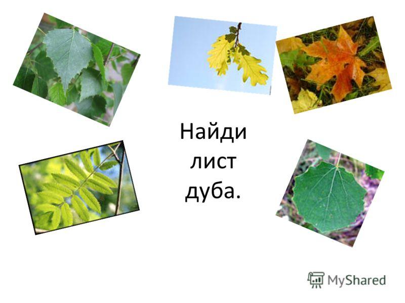 Найди лист клёна.