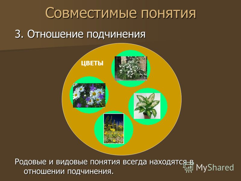 Совместимые понятия 3. Отношение подчинения Родовые и видовые понятия всегда находятся в отношении подчинения. ЦВЕТЫ