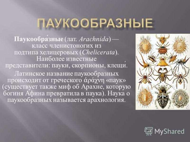 Паукообразные ( лат. Arachnida ) класс членистоногих из подтипа хелицеровых ( Chelicerata ). Наиболее известные представители : пауки, скорпионы, клещи. Латинское название паукообразных происходит от греческого ράχνη « паук » ( существует также миф о