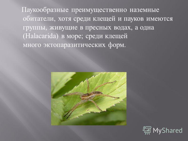Паукообразные преимущественно наземные обитатели, хотя среди клещей и пауков имеются группы, живущие в пресных водах, а одна (Halacarida) в море ; среди клещей много эктопаразитических форм.