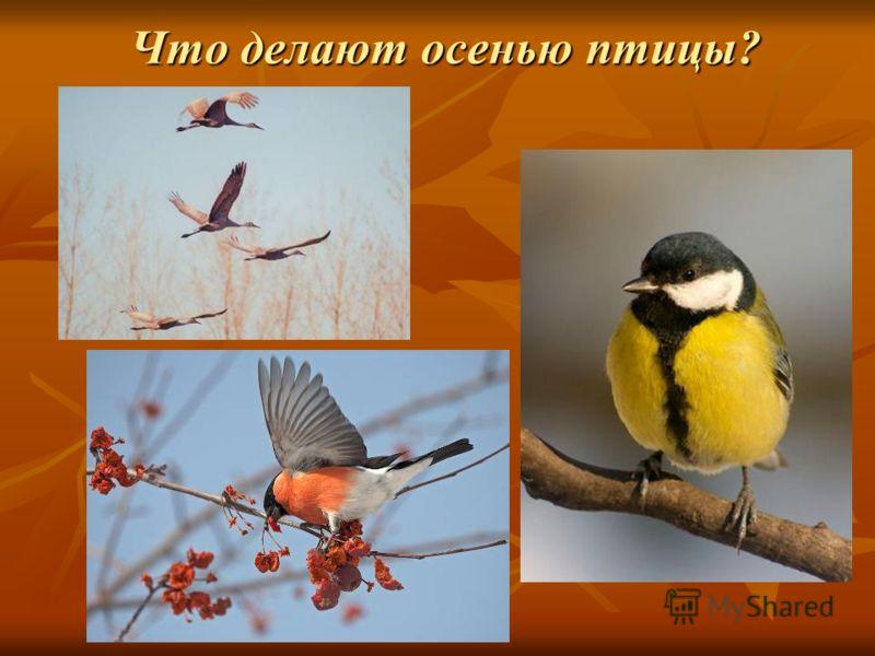 Что делают осенью птицы?