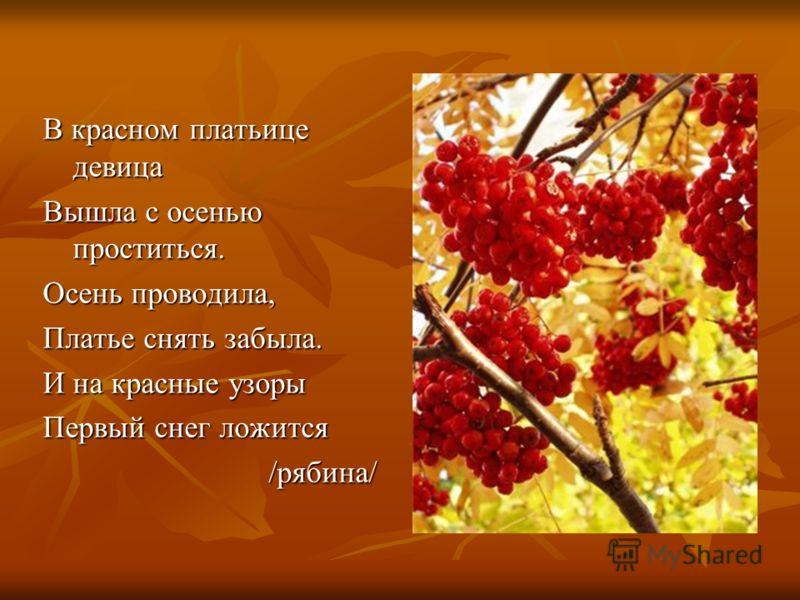 В красном платьице девица Вышла с осенью проститься. Осень проводила, Платье снять забыла. И на красные узоры Первый снег ложится /рябина/ /рябина/