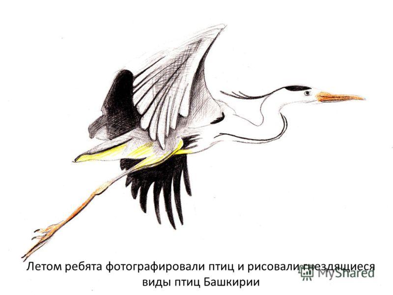 Летом ребята фотографировали птиц и рисовали гнездящиеся виды птиц Башкирии