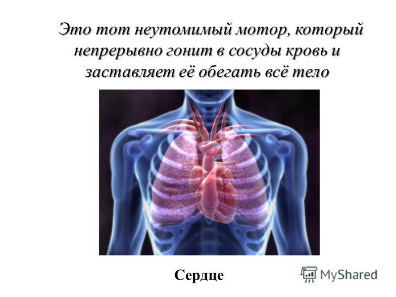 Это тот неутомимый мотор, который непрерывно гонит в сосуды кровь и заставляет её обегать всё тело Сердце