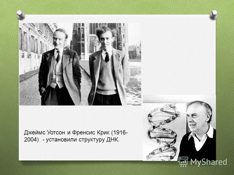 Джеймс Уотсон и Френсис Крик (1916- 2004) - установили структуру ДНК.