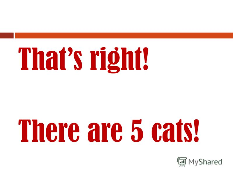 And now… There are 5 cat..?