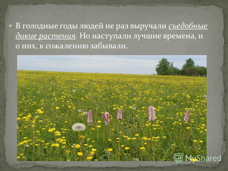 В голодные годы людей не раз выручали съедобные дикие растения. Но наступали лучшие времена, и о них, к сожалению забывали.