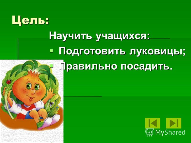 Цель: Научить учащихся: Подготовить луковицы; Подготовить луковицы; Правильно посадить. Правильно посадить.