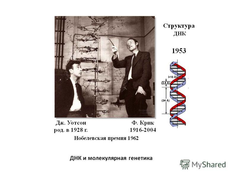ДНК и молекулярная генетика