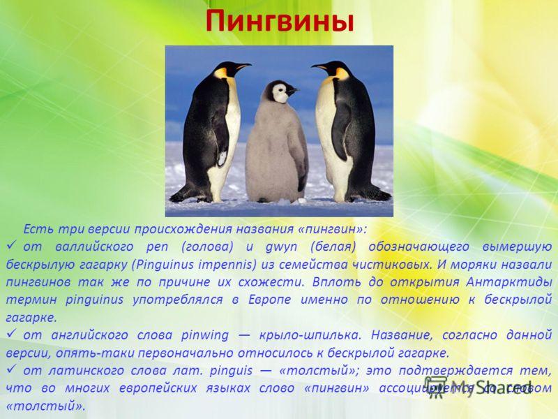 Пингвины Есть три версии происхождения названия «пингвин»: от валлийского pen (голова) и gwyn (белая) обозначающего вымершую бескрылую гагарку (Pinguinus impennis) из семейства чистиковых. И моряки назвали пингвинов так же по причине их схожести. Впл