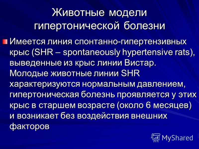 Животные модели гипертонической болезни Имеется линия спонтанно-гипертензивных крыс (SHR – spontaneously hypertensive rats), выведенные из крыс линии Вистар. Молодые животные линии SHR характеризуются нормальным давлением, гипертоническая болезнь про