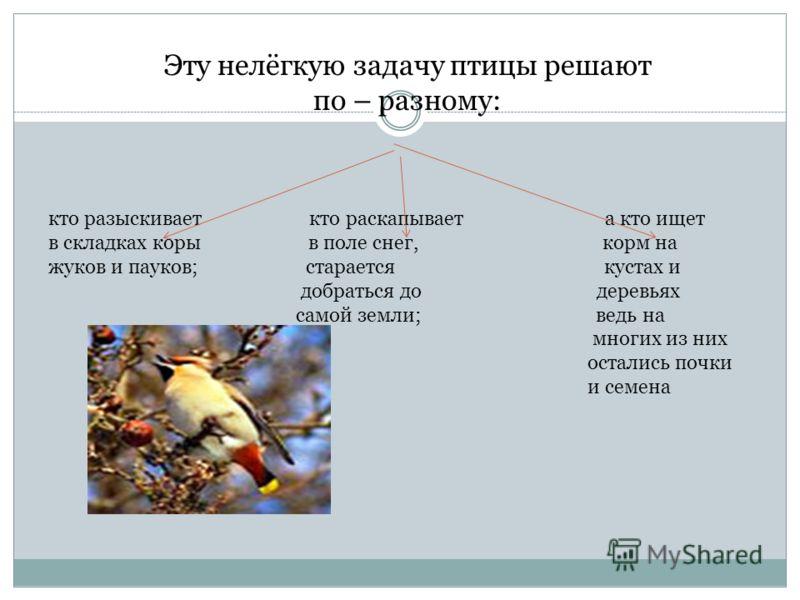 Эту нелёгкую задачу птицы решают по – разному: кто разыскивает кто раскапывает а кто ищет в складках коры в поле снег, корм на жуков и пауков; старается кустах и добраться до деревьях самой земли; ведь на многих из них остались почки и семена