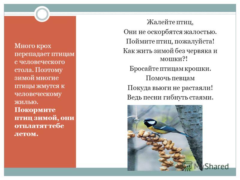 Картинки на тему поможем птицам зимой
