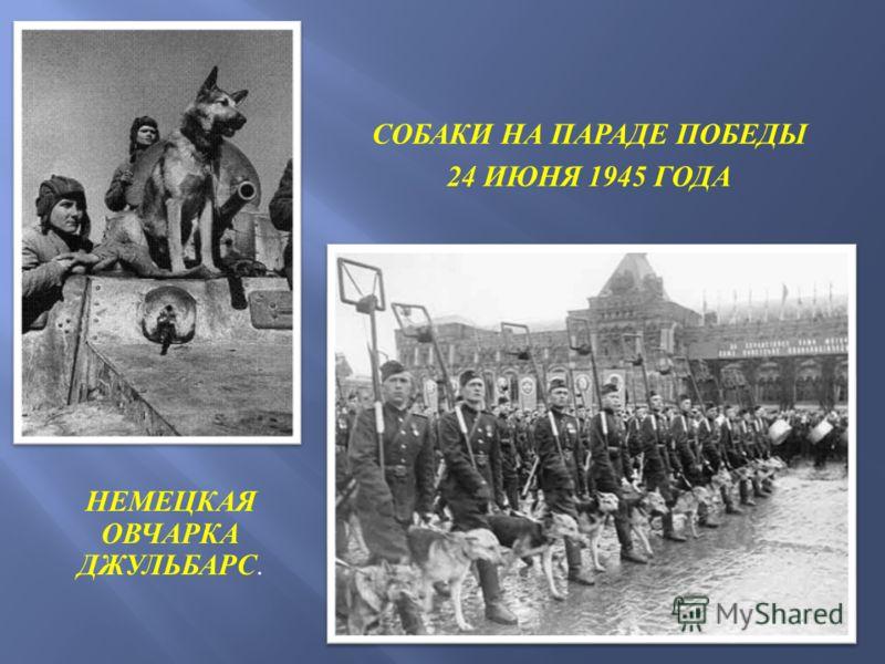 НЕМЕЦКАЯ ОВЧАРКА ДЖУЛЬБАРС. СОБАКИ НА ПАРАДЕ ПОБЕДЫ 24 ИЮНЯ 1945 ГОДА