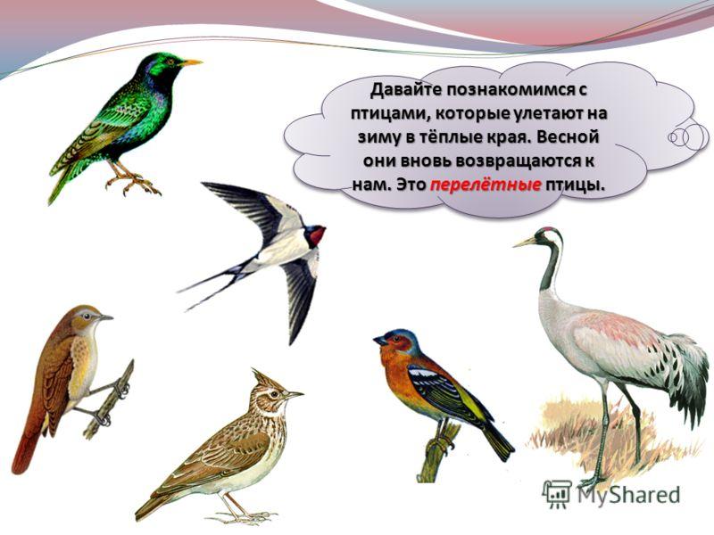 Совы - очень интересные птицы. О них сложено много легенд, поверий и сказок. Из-за необычной внешности, страшного голоса, бесшумного полета и ночного образа жизни люди боялись этих птиц. Сову часто называют лесной, или пернатой, кошкой. Почему? Оба ж