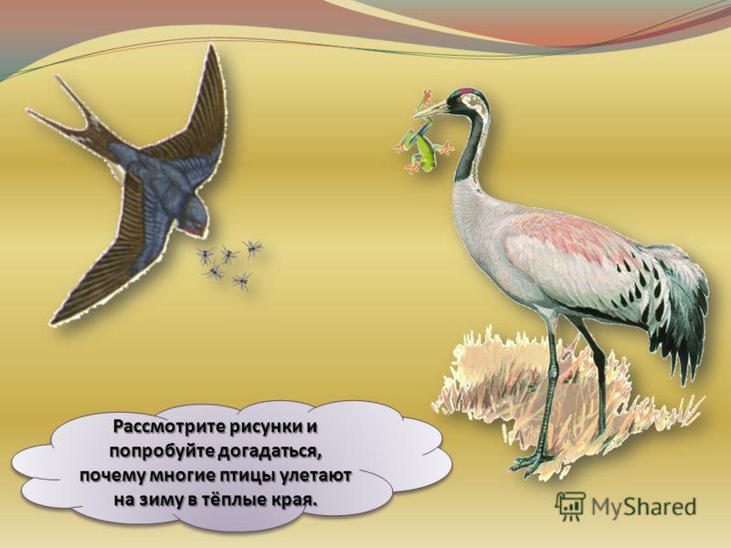 Места гнездовий, зимовок и маршруты пути у большинства птиц постоянные и с годами не меняются. Весной они возвращаются в те же места, где вывелись или гнездились в прошлом году. Места гнездовий, зимовок и маршруты пути у большинства птиц постоянные и