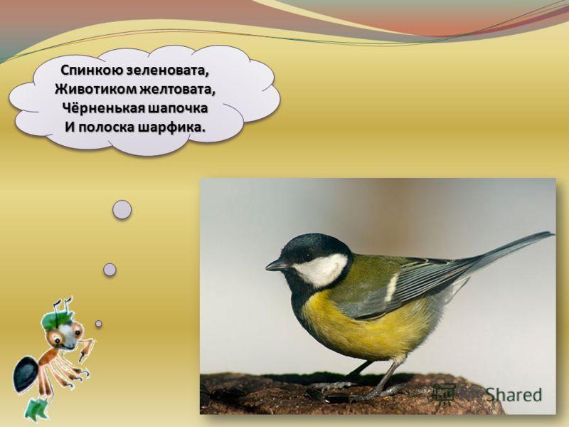 Угадайте, что за птичка Темненькая невеличка. Беленькая с живота, Хвост раздвинут в два хвоста.