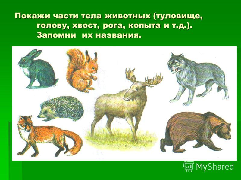 Покажи части тела животных (туловище, голову, хвост, рога, копыта и т.д.). Запомни их названия.