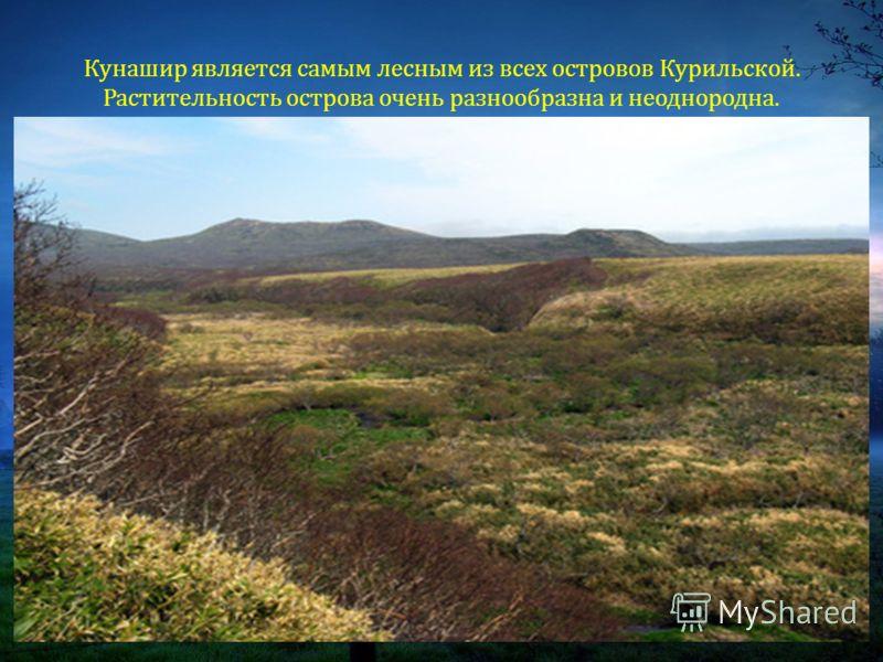 Кунашир является самым лесным из всех островов Курильской. Растительность острова очень разнообразна и неоднородна.