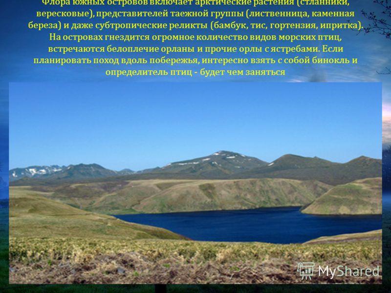Флора южных островов включает арктические растения ( стланники, вересковые ), представителей таежной группы ( лиственница, каменная береза ) и даже субтропические реликты ( бамбук, тис, гортензия, ипритка ). На островах гнездится огромное количество