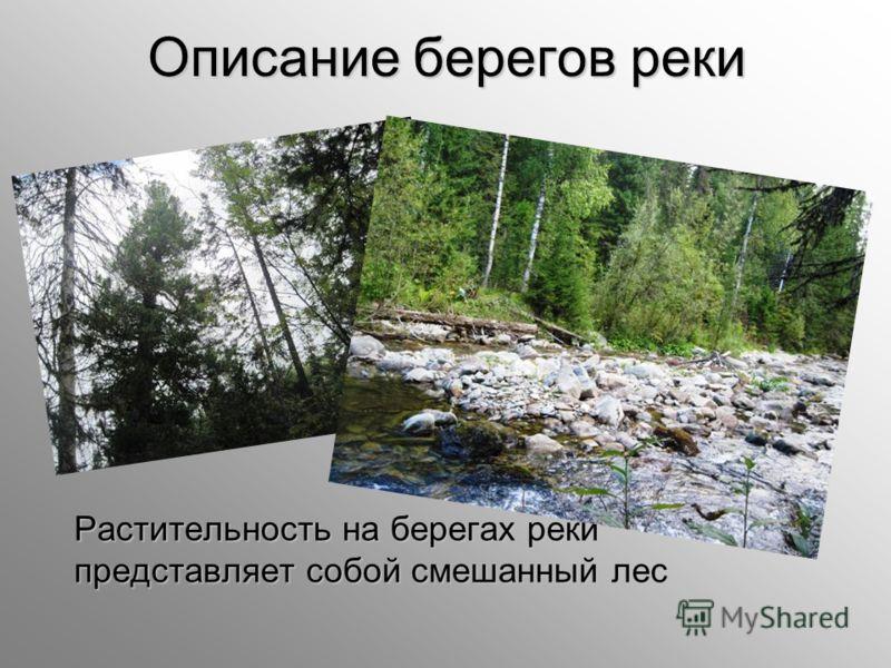 Описание берегов реки Растительность на берегах реки представляет собой смешанный лес