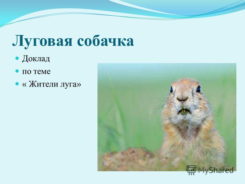 Луговая собачка Доклад по теме « Жители луга»