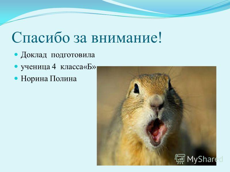 Спасибо за внимание! Доклад подготовила ученица 4 класса«Б» Норина Полина
