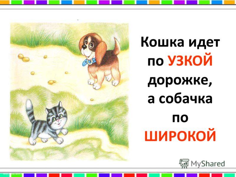 Кошка идет по УЗКОЙ дорожке, а собачка по ШИРОКОЙ