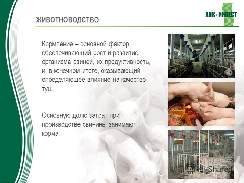 ЖИВОТНОВОДСТВО Кормление – основной фактор, обеспечивающий рост и развитие организма свиней, их продуктивность, и, в конечном итоге, оказывающий определяющее влияние на качество туш. Основную долю затрат при производстве свинины занимают корма.