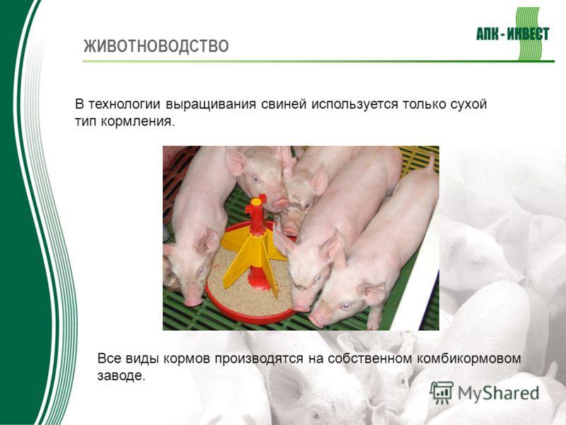 В технологии выращивания свиней используется только сухой тип кормления. Все виды кормов производятся на собственном комбикормовом заводе.