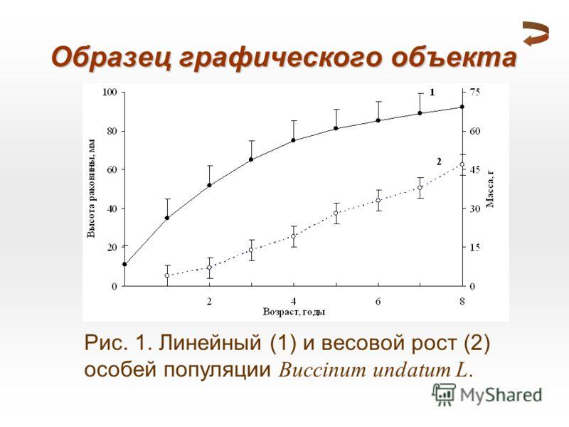 Рис. 1. Линейный (1) и весовой рост (2) особей популяции Buccinum undatum L. Образец графического объекта