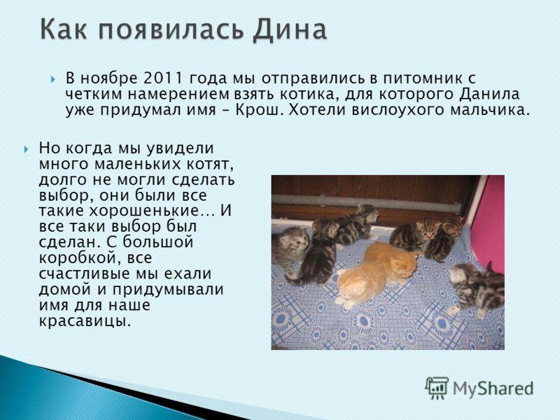 Но когда мы увидели много маленьких котят, долго не могли сделать выбор, они были все такие хорошенькие… И все таки выбор был сделан. С большой коробкой, все счастливые мы ехали домой и придумывали имя для наше красавицы. В ноябре 2011 года мы отправ