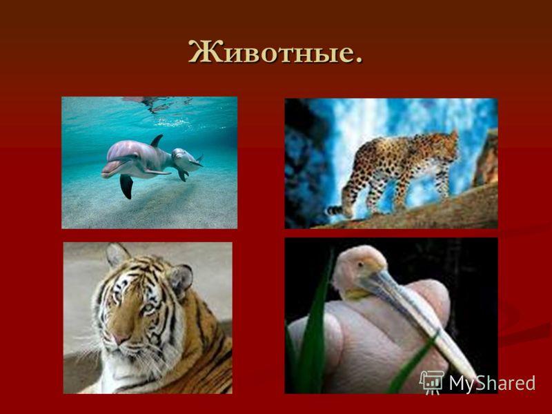 Животные.