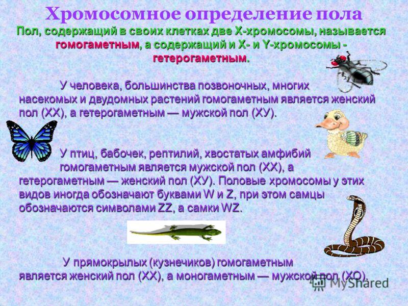 У человека, большинства позвоночных, многих насекомых и двудомных растений гомогаметным является женский пол (XX), а гетерогаметным мужской пол (ХУ). У птиц, бабочек, рептилий, хвостатых амфибий гомогаметным является мужской пол (XX), а гетерогаметны