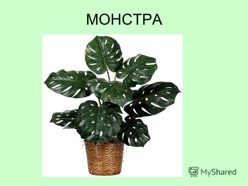 МОНСТРА