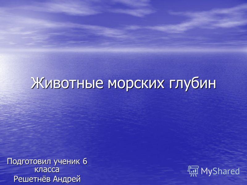 Животные морских глубин Подготовил ученик 6 класса Решетнёв Андрей