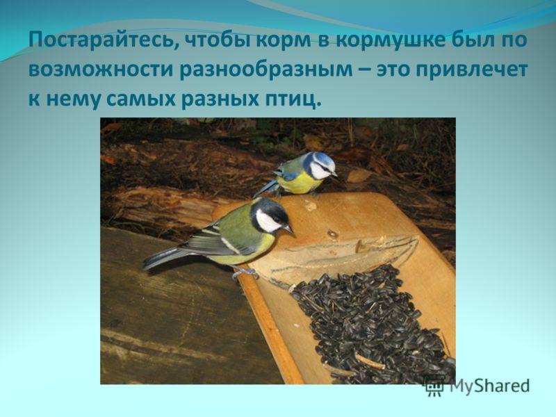 Постарайтесь, чтобы корм в кормушке был по возможности разнообразным – это привлечет к нему самых разных птиц.